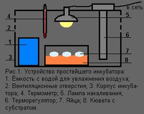 Простейших инкубаторах